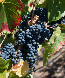 Winery Guide provided by Doug Swanson - top Sonoma County real estate agent
