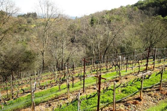 hoby vineyard