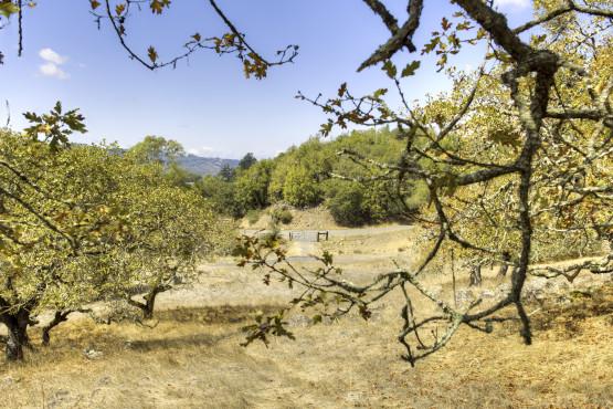 3141 Mantanzas Creek Ln – 02