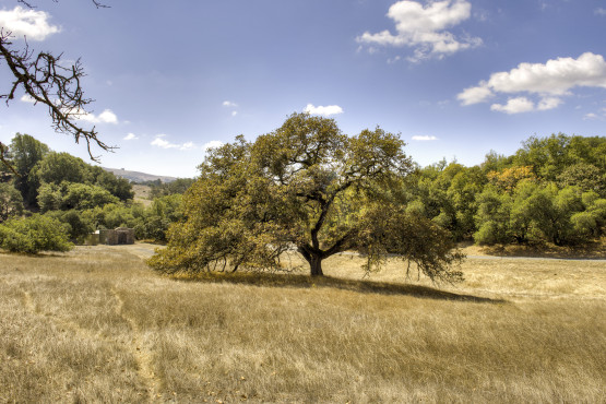 Sonoma County Estate Parcel
