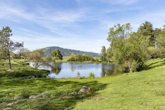 Bennett Valley Equestrian & Vineyard Estate