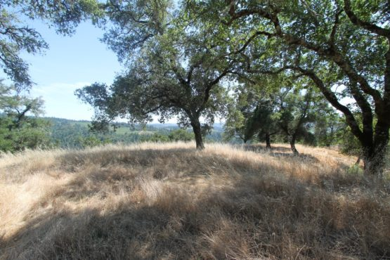Knights Valley Wine Country Estate Parcel128 Video Tour