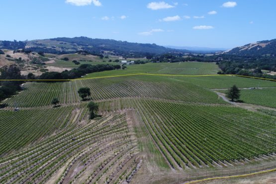 Bennett Valley Vineyard Estate Parcel