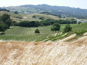 Bennett Valley's Exclusive Wine Country