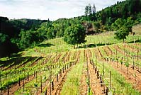 Collier Falls Vineyards