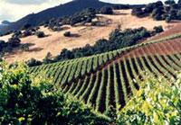 Kunde Estate Winery & Vineyards